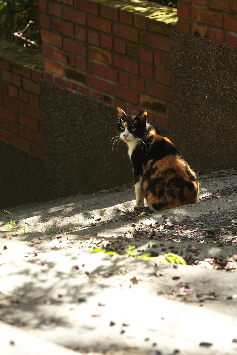 猫や猫や_f0021869_15323035.jpg