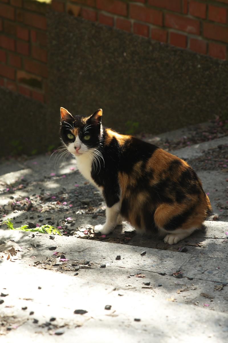 猫や猫や_f0021869_15332365.jpg