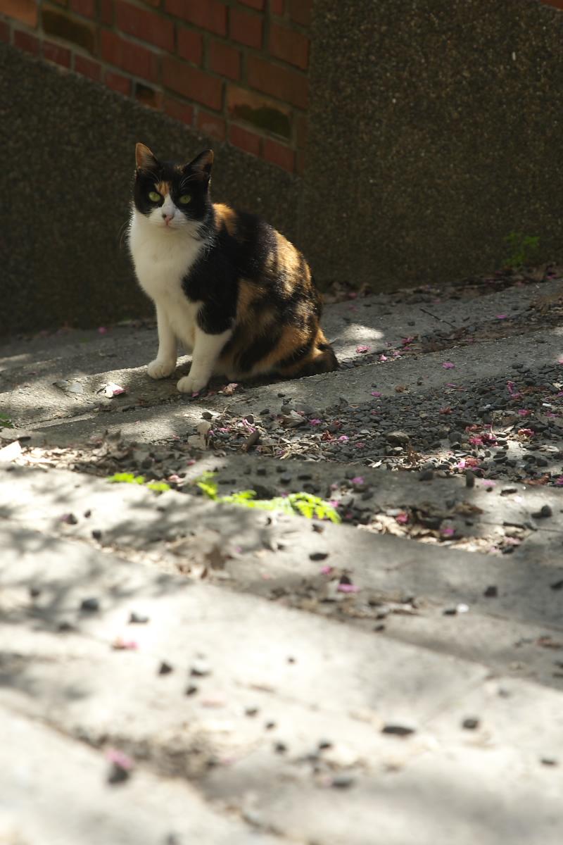 猫や猫や_f0021869_15471913.jpg
