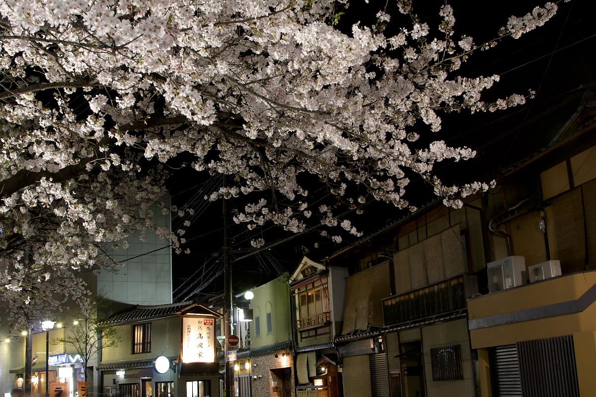 京都 夜桜 スナップ_f0021869_1616242.jpg