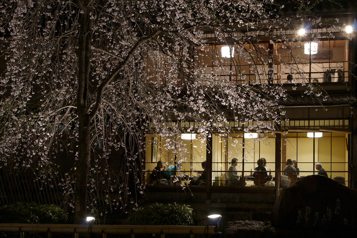 京都 夜桜 スナップ_f0021869_16183441.jpg
