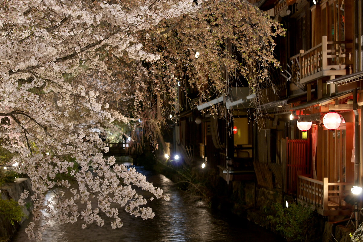 京都 夜桜 スナップ_f0021869_1619457.jpg