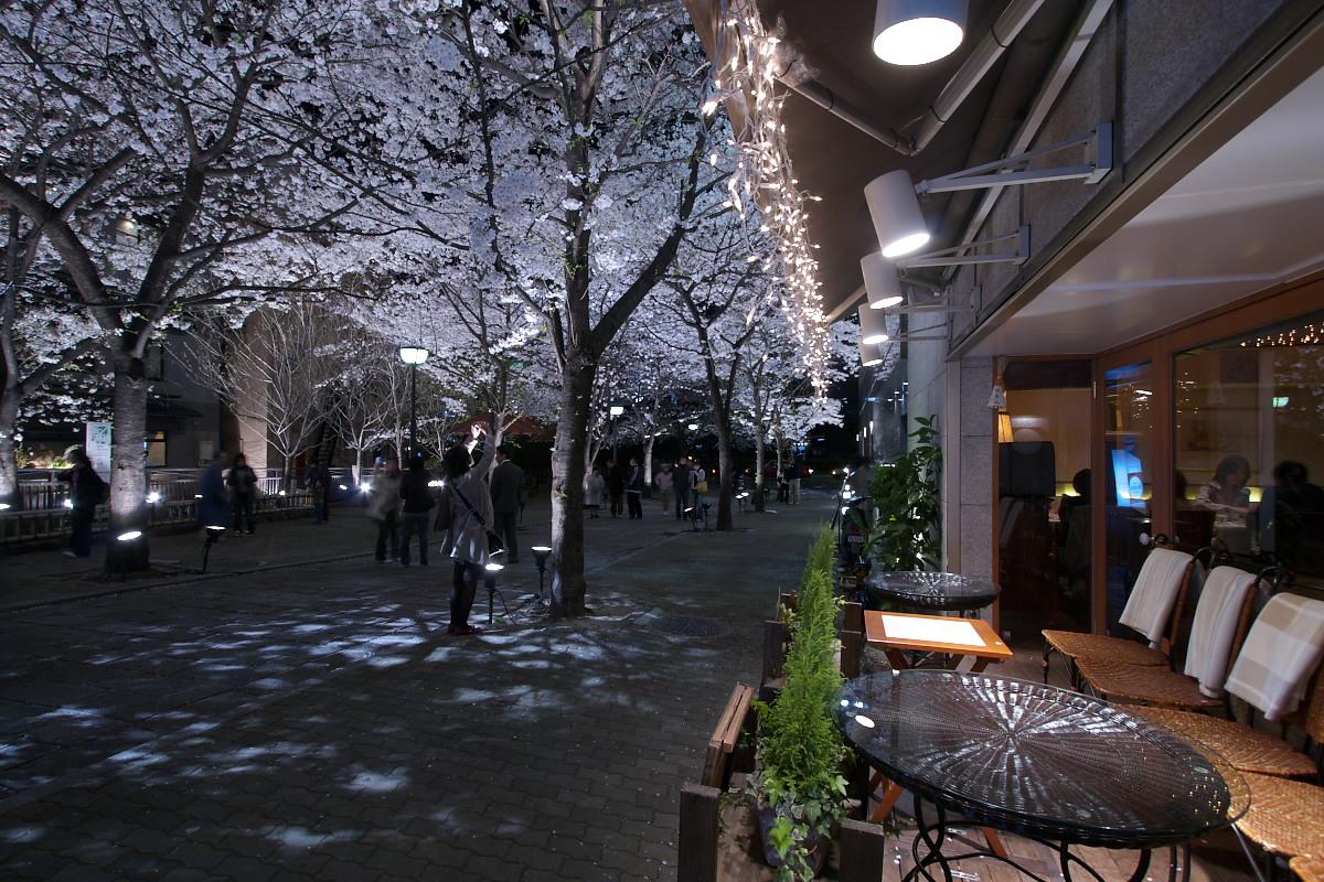 京都 夜桜 スナップ_f0021869_16204362.jpg