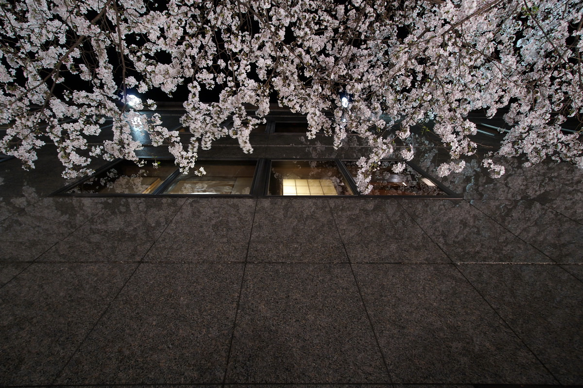 京都 夜桜 スナップ_f0021869_16213231.jpg