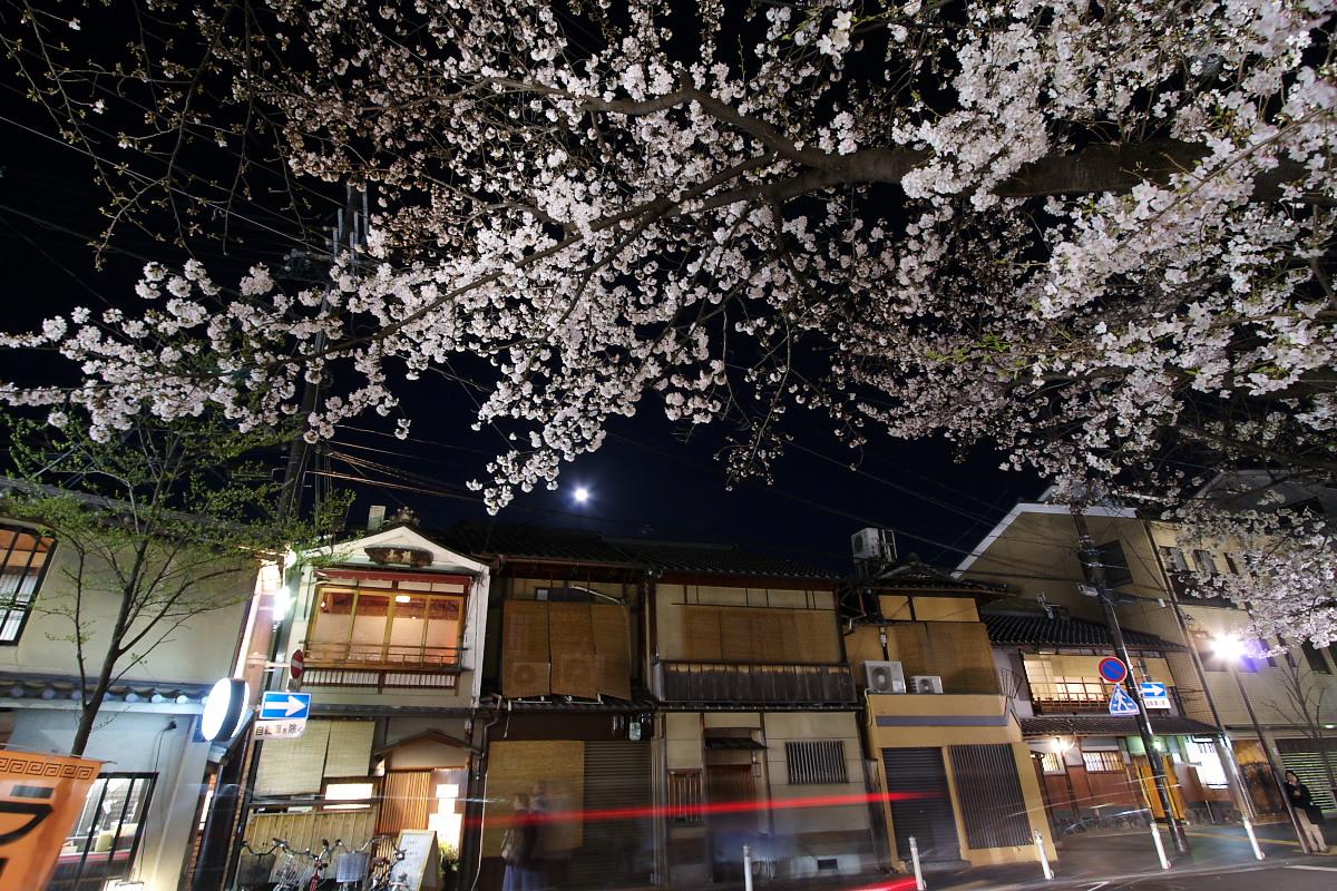 京都 夜桜 スナップ_f0021869_16222258.jpg