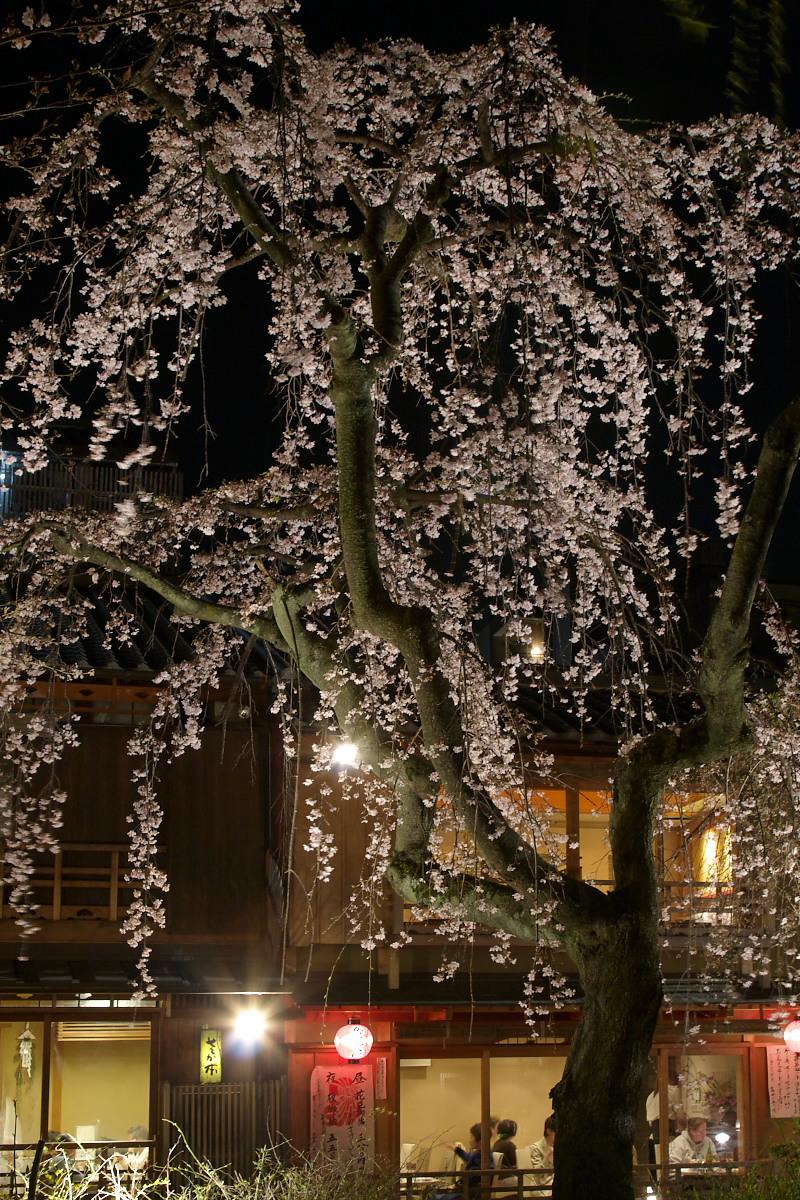 京都 夜桜 スナップ_f0021869_16243840.jpg