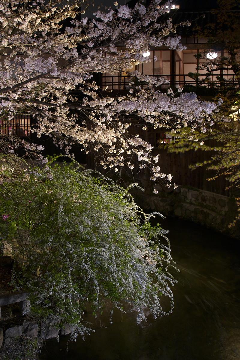 京都 夜桜 スナップ_f0021869_1626740.jpg