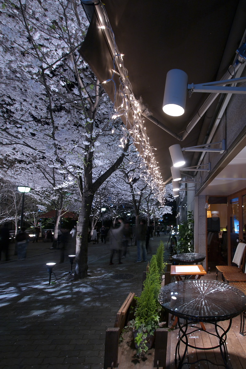 京都 夜桜 スナップ_f0021869_16274474.jpg