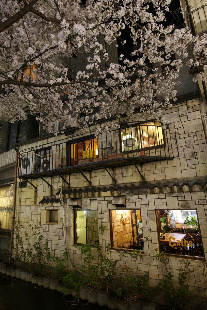 京都 夜桜 スナップ_f0021869_1630222.jpg