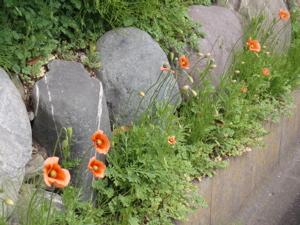 f0130894_2010285.jpg