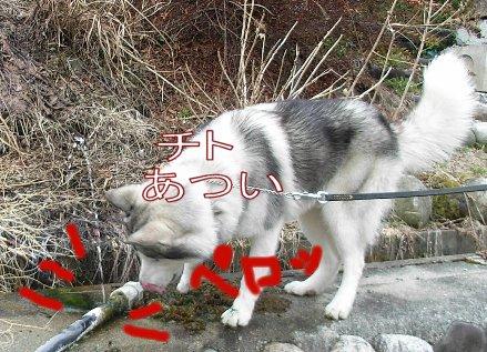 f0112407_112895.jpg