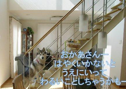 f0112407_1453625.jpg
