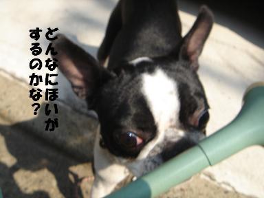 f0110199_16143092.jpg