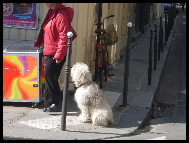 ■待つワンコ(パリ)_a0008105_4222827.jpg