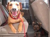 大型犬の事故_d0092605_101656.jpg