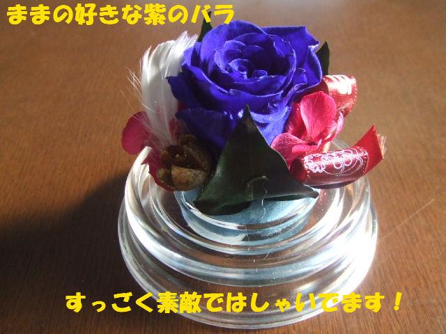 f0059334_9501045.jpg