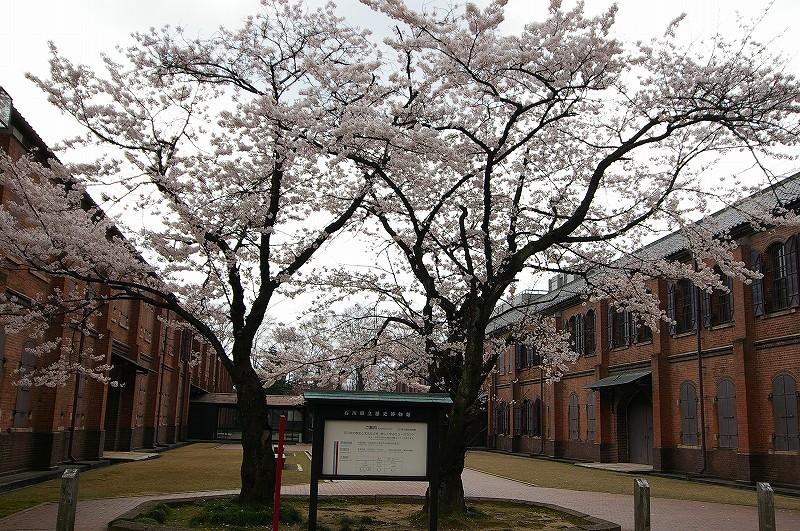 桜満開の金沢_d0043136_19242565.jpg