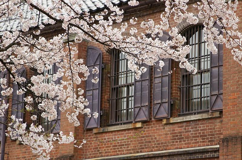 桜満開の金沢_d0043136_19244671.jpg