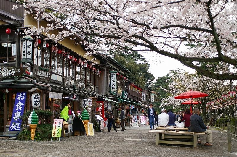 桜満開の金沢_d0043136_19262926.jpg