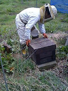 ミツバチさん、参上!_d0010039_10401262.jpg