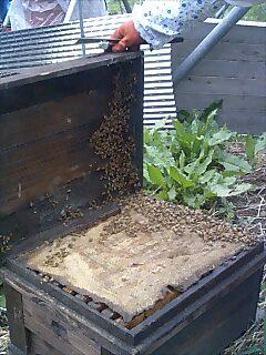 ミツバチさん、参上!_d0010039_10401362.jpg