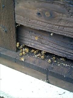 ミツバチさん、参上!_d0010039_10401367.jpg