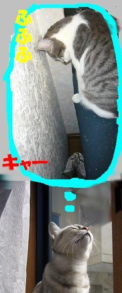 f0002743_1493023.jpg
