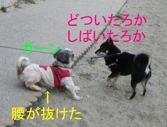 f0053952_1356675.jpg