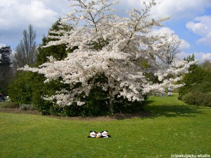 ケンブリッジから春の風_e0015195_2343375.jpg