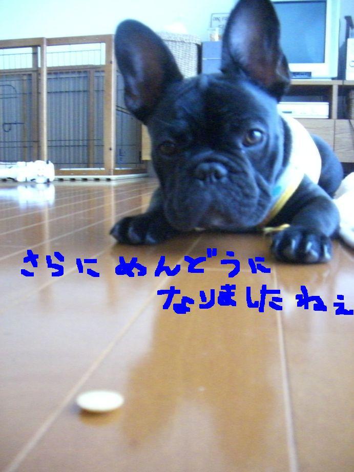 c0113109_426076.jpg