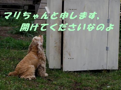 b0067012_1344798.jpg