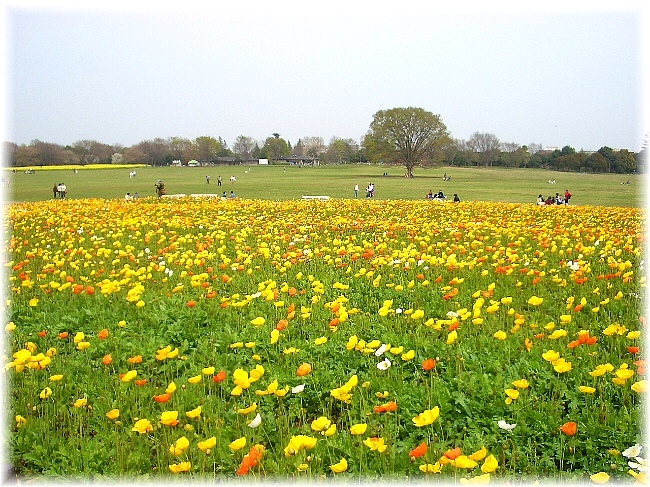 flower festival_d0083623_1811921.jpg