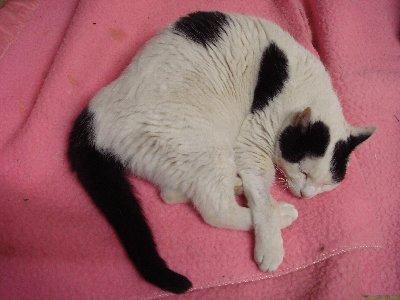 猫受難の年_c0111229_19175312.jpg