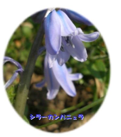 b0084961_092562.jpg