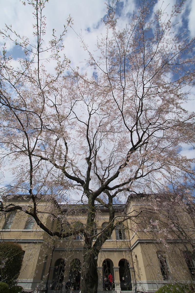 京都府庁 春の一般公開 1_f0021869_12205760.jpg