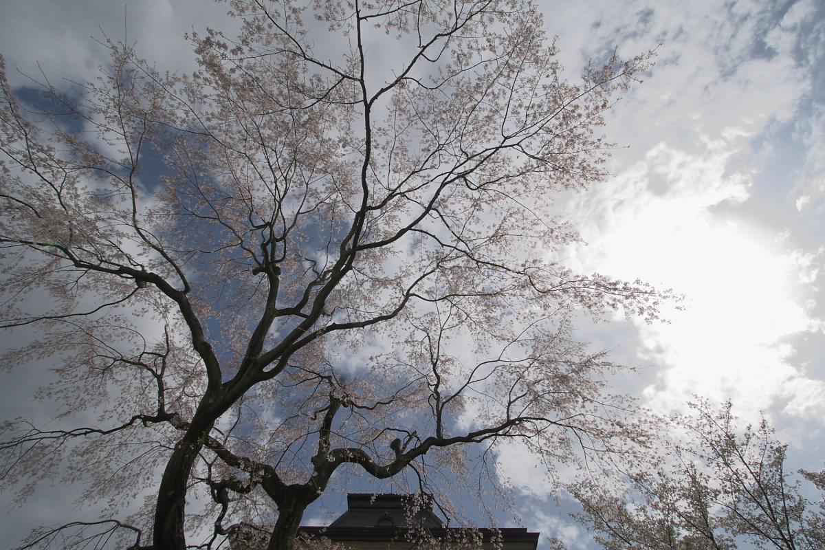 京都府庁 春の一般公開 1_f0021869_1222178.jpg