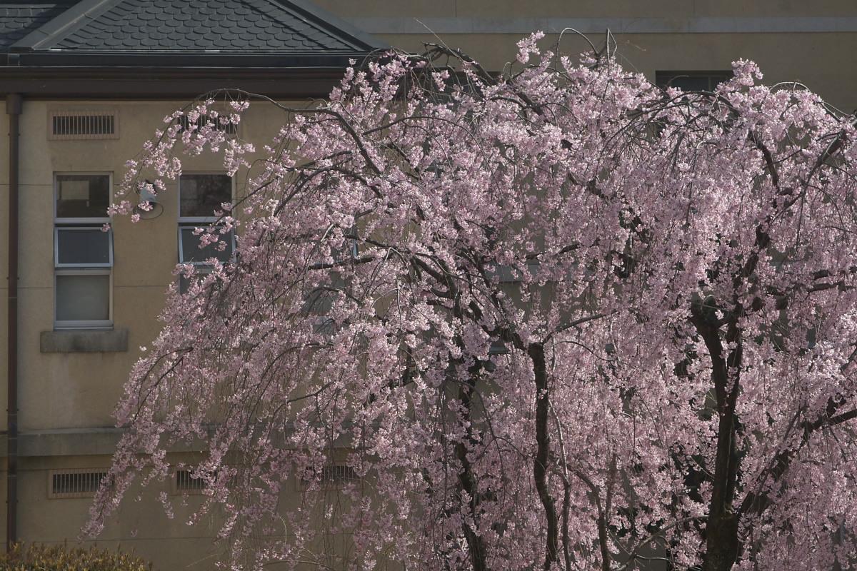 京都府庁 春の一般公開 2_f0021869_12341586.jpg