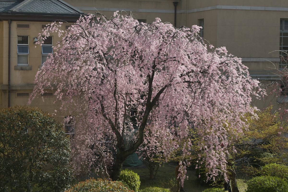 京都府庁 春の一般公開 2_f0021869_12352140.jpg