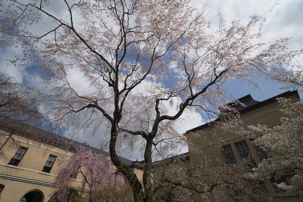京都府庁 春の一般公開 1_f0021869_1244476.jpg