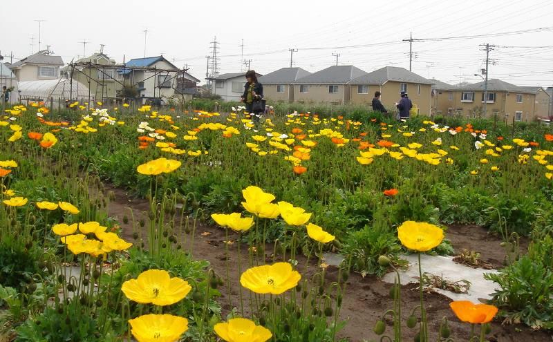花の摘み取り_f0059673_5515349.jpg