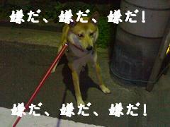 赤、青、黄色~♪_d0087483_2254521.jpg