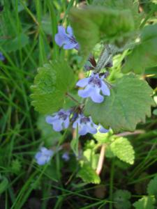 森で見つけた春_f0106597_18144332.jpg