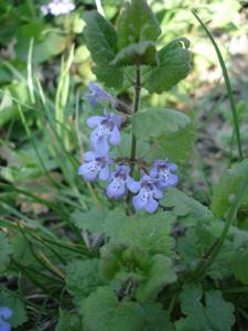 森で見つけた春_f0106597_1820466.jpg