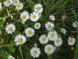 森で見つけた春_f0106597_18215724.jpg