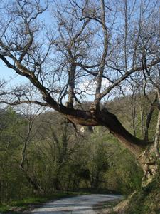 森で見つけた春_f0106597_182458.jpg