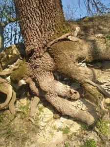 森で見つけた春_f0106597_18251424.jpg
