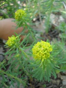 森で見つけた春_f0106597_18294152.jpg
