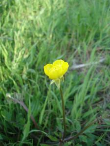森で見つけた春_f0106597_1832612.jpg