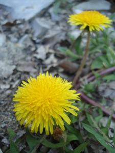 森で見つけた春_f0106597_1835551.jpg