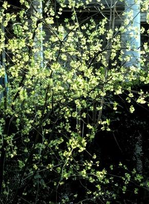 ちいさな庭の小さな自然_e0010418_1422216.jpg